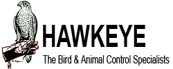 Humane Wildlife Animal Removal - Hawkeye