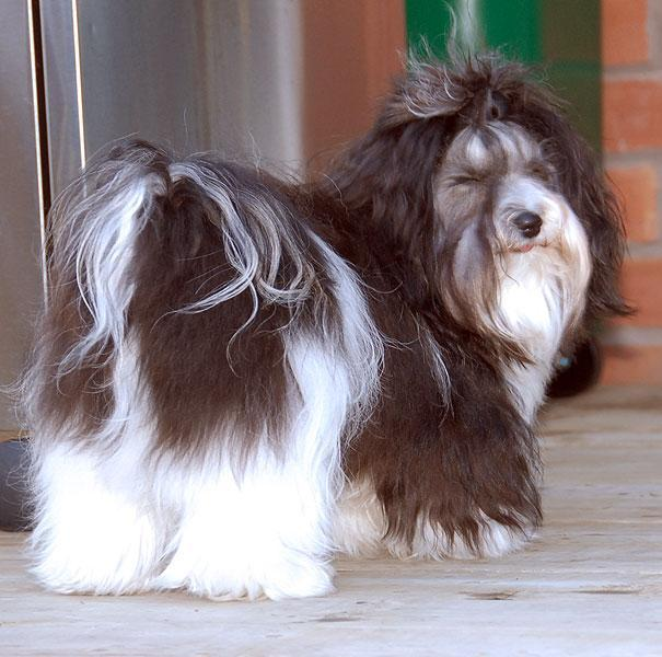 Movie Trained Dog Toronto