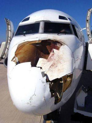 Aviation Safety - Birdstrike