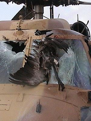 Bird Strike Damaged Aircraft